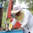 Beekeeper working in apiary — Stock Video