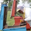 Stock Video: Beekeeper working