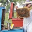 Beekeeper with honeycombs — Stock Video