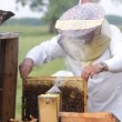 Stock Video: Beekeeper with honeycombs