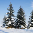 Fir trees on winter — Stock Photo #14338465