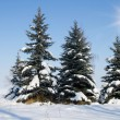 Fir trees on winter - Stock Photo