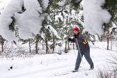 Skier in winter — Stock Photo