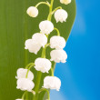 Lily of the valley — Stock Photo #18364229