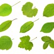 Collection fruit leaves — Stock Photo