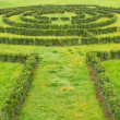 Green bushes Labyrinth — Stock Photo