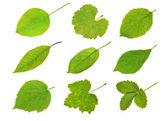 Colección frutas hojas — Foto de Stock