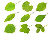 Collection fruit leaves — Foto de Stock
