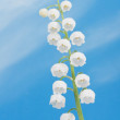 Lily of the valley on a blue sky — Stock Photo #20142709
