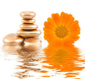 Golden spa stone and calendula flowers — Stock Photo