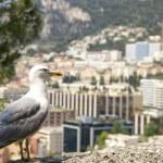 Albatross against Monaco. — Stock Photo