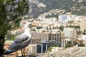 Albatross against Monaco. — Stock Photo