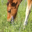 Beautiful foal — Stock Video