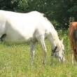 Mother and baby horse — Stock Video #22235595