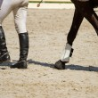 Horse and  jockey legs — Stock Photo