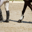 Stock Photo: Horse and jockey legs