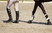 Horse and jockey legs — Stock Photo