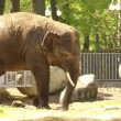 Baby elephant — Stock Video #24941261