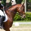 Stock Photo: Dressage horse and rider