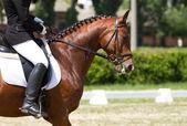 Dressyrhäst och ryttare — Stockfoto
