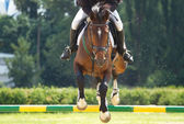 Equestrian show jumping — Photo