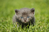 Kitten on the grass — Stock Photo