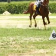 Horse jump a hurdle — Stock Video