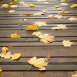 Maple leaves on a  bridge — Stock Photo