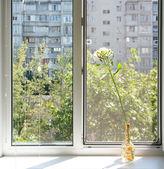 Fönster med en vas — Stockfoto