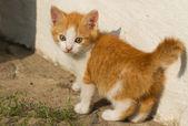 Baby kitten — Стоковое фото