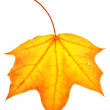 Colorful maple leaf — Stock Photo