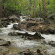 Stock Video: Stream on mountain river