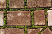 Green moss grows between bricks — Stock Photo