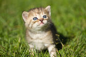 Baby kitten on the  grass — Stock Photo