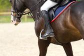 Dressage horse  — 图库照片