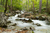 Stream of the mountain river ( long exposure ) — Stock Photo