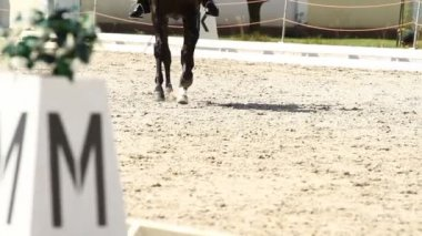 Horse Dressage Rings — Stock Video