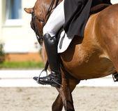 Dressage horse  — Stock Photo