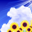 Stock Vector: Sunflower summer sky background