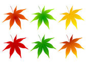 Maple leaf foliage — Vector de stock