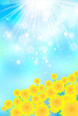 Summer greeting sunflower background — Stock Vector