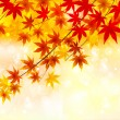 Maple autumn leaves autumn background — Stock Vector