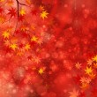 Maple autumn leaves background — Stock Vector #31227631