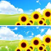 Sunflower landscape background — Vetorial Stock