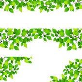 Fresh green leaf background — Stock Vector