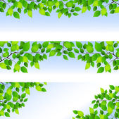 Fresh green leaf background — Vector de stock