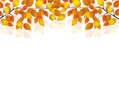 Maple foliage landscape — Stock Vector