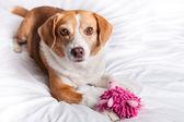 Cute Dog close up — Stock Photo