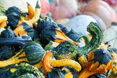Kalebas en pompoen collectie — Stockfoto