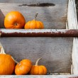 Stock Photo: Pumpkins on worn shelves